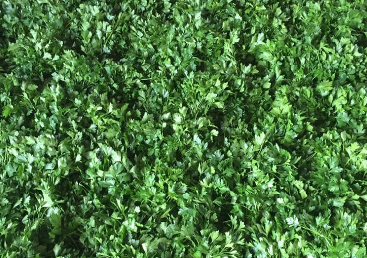 Производство зелени